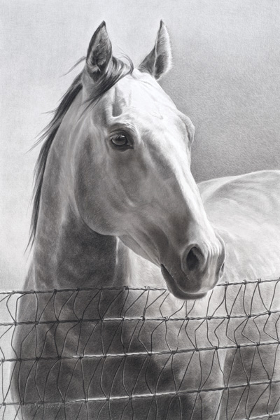 Mary Ross Buchholz, A Rancher's Foundation, charcoal/graphite, 24 x 16.