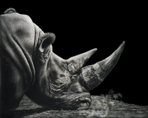 Heather Lara, Tired, scratchboard/ink, 24 x 30.