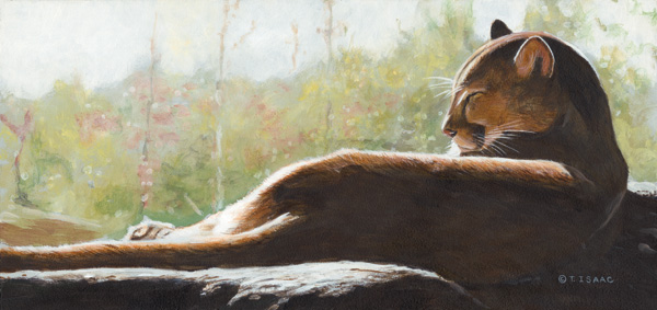Terry Isaac, Sunlight Repose, acrylic, 7 x 15.