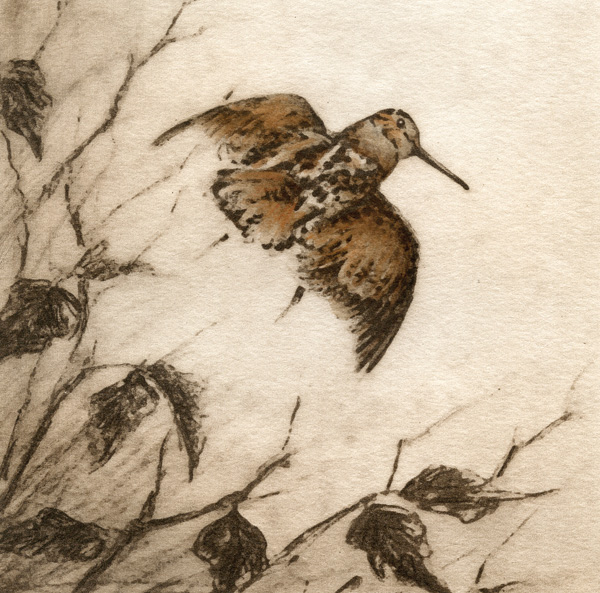 Melanie Fain, Woodcock, etching/watercolor, 6 x 6.