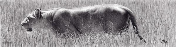Robert Louis Caldwell, Margin (lioness), graphite pencil, 5 x 19.