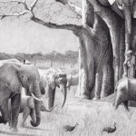 Robert Louis Caldwell, Thirty-Three (African elephants), graphite pencil, 10 x 17.