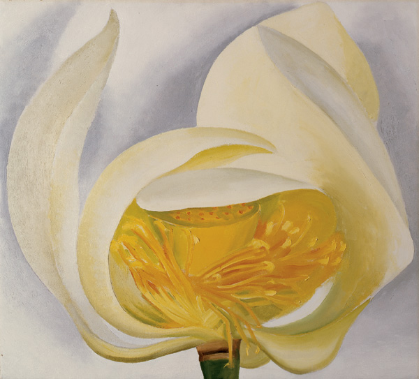 Georgia O'Keeffe, White Lotus, 1939, oil on canvas, 20 x 22, Muscatine Art Center, Iowa. Given in Honor of Elizabeth Mabel Holthues Stanley by her family.