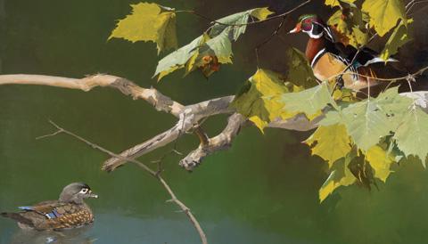 Mark Eberhard | Bird Calling