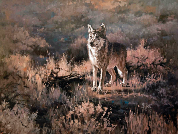 Linda Budge, Mexican Grey Wolf, oil, 18 x 24.