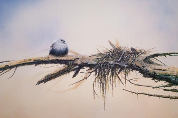 Jack Coneby, Young Dove, watercolor, 19 x 27.