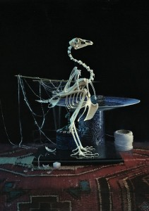 Daniel Sprick, Bird Skeleton, oil, 20 x 16.