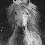 Carol Walker, Splash, photograph, 40 x 30.