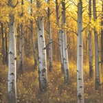 Kasey Nixon, October Aspens, oil, 20 x 20.