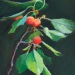 Sheri Farabaugh, Sour Cherries, oil, 5 x 7.