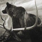 Rox Corbett, Windfall, charcoal, 22 x 28.