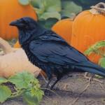 Shawn Gould, Harvest Raven, acrylic, 18 x 24.