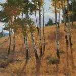 Aspen Grove, oil, 16 x 16.