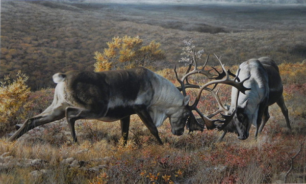 Carl Brenders, Fighting Caribou, acrylic, 30 x 40.