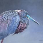 Ed Takacs, Little Blue Heron, acrylic, 16 x 20.