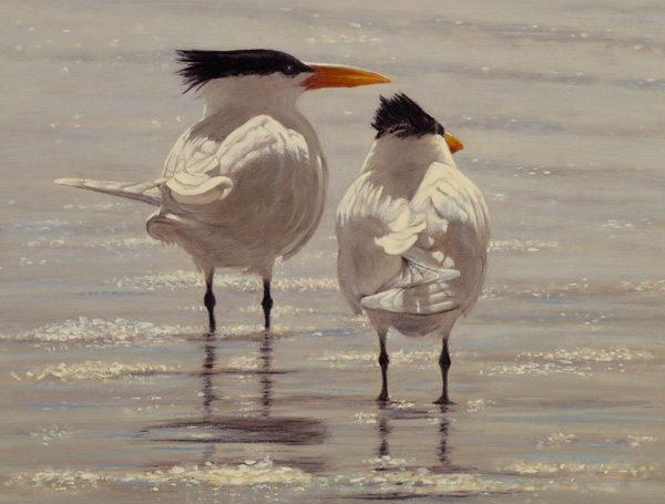 Timothy David Mayhew, One Good Tern, oil, 9 x 12.