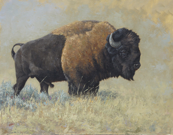 Greg Wilson, Buffalo Study, oil, 14 x 18.
