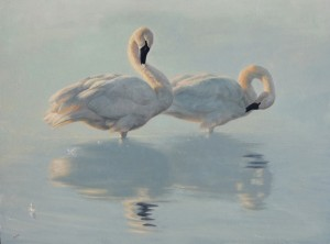 Greg Wilson, Preening Beauties, oil, 18 x 24.