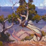 Jim Wodark, Ancient Pine, oil, 20 x 24.
