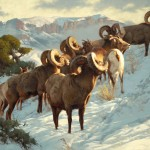 Band of Bighorns, oil, 30 x 40.