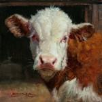 William Suys, Curious Calf, oil, 6 x 6.