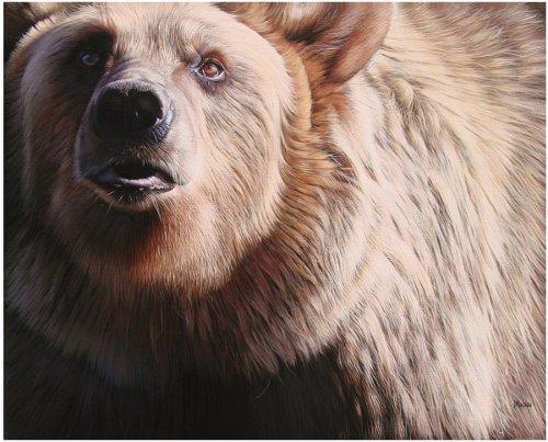 An Angel Passes (Brun Bear) by Drochon Christophe