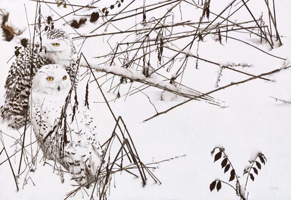 Mark Eberhard, Snowy Owls, oil, 22 x 32.