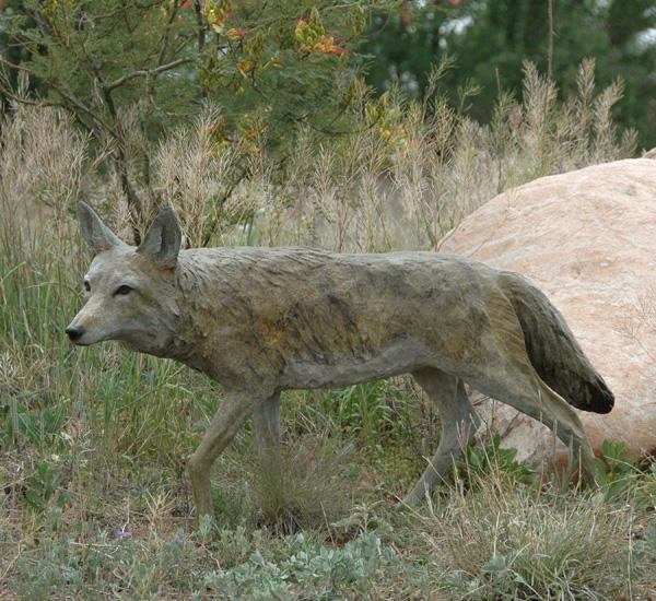 Jim Eppler, Coyote Life Size, bronze, 25 x 46 x 10.