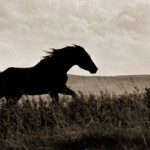 Gregg Albracht, Horses in a Dream, photograph, 9 x 26.