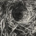 Robin Cole Smith, Instinct I, encaustic/charcoal, 16 x 16.