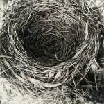 Robin Cole Smith, Instinct III, encaustic/charcoal, 46 x 46.