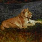 Ron Barsano, Lioness, oil, 24 x 30.
