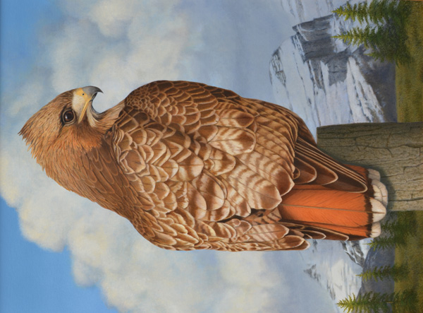 Tom Palmore, Red Tailed Hawk, oil/acrylic, 40 x 30.