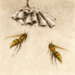 Melanie Fain, Paper Wasps, etching/watercolor, 3 x 3.