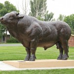 Daniel Glanz, Bull Headed, bronze, 68 x 126 x 44.