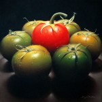 Red & Green Tomatoes, pastel, 16 x 16.
