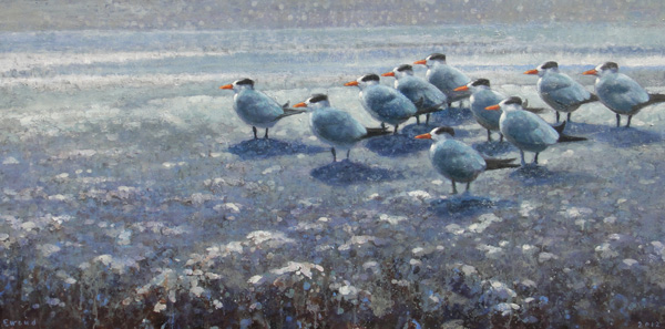 Ewoud de Groot, Royal Terns, oil, 31 x 63.