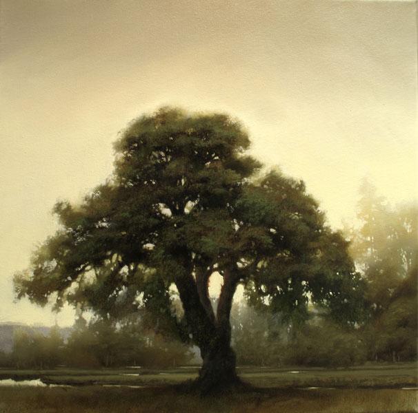Renato Muccillo | Scots Pine at Dawn, oil, 16 x 16.