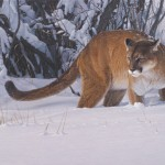 Daniel Smith, Snow Patrol, acrylic, 20 x 33.