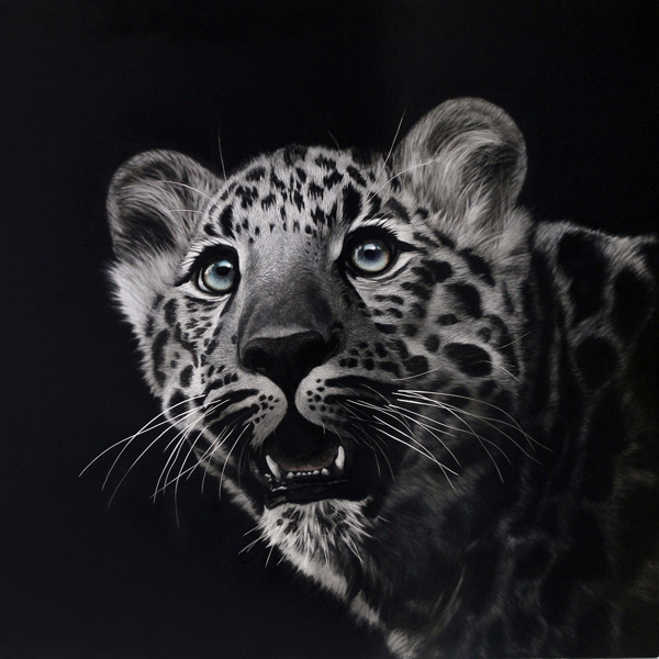 Cathy Sheeter, Spellbound, scratchboard, 24 x 24.