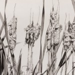 Cathy Trachok, Cattails in the Fall, graphite, 22 x 30.